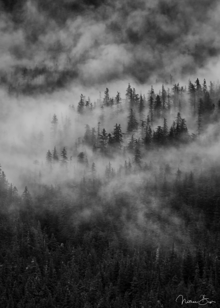 Photographed from the side of a boat as I was heading to the glaciers of Alaska, these tall pines just barely protrude from the early-morning misty fog clinging to the mountains.
