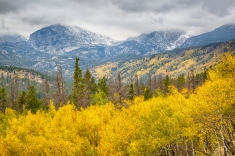 Orange and Yellow Aspen Trees make up the foreground of this beautiful fall foliage landscape photograph from Rocky Mountain National Park. Foliage lines the mountain edges, while towering snow-dusted mountain peaks kiss the clouds in the background.