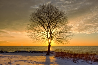 The Silhouette of a tree at New Castle Commons frames the sunrise as orange rays of light shine between the branches of the tree creating this beautiful landscape sunrise photograph.