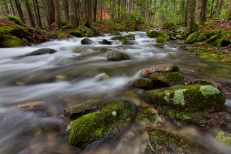 A beautiful landscape photograph of a graceful stream flowing softly over and around green moss-covered stones in the forest of New Hampshire. As the flow of the water trickles past, it is almost as if you can hear it whisper through the forest surrounding it.